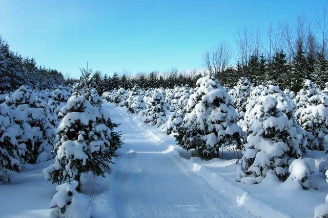 rangee_hiver1